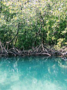 Warna air ketika susur mangrove. Biru sekali, ya!