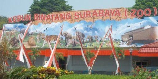Kebun Binatang Surabaya (KBS)