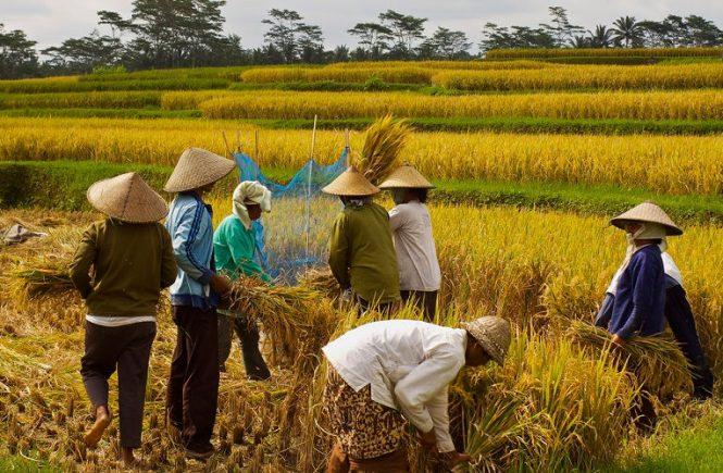 Perawatan Alat Berat untuk Pertanian yang Bisa Dicoba